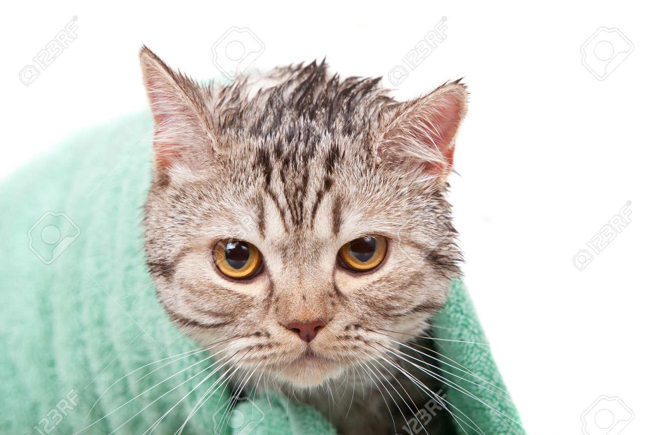 unhappy wet cat in green towel Stock Photo - 11888663