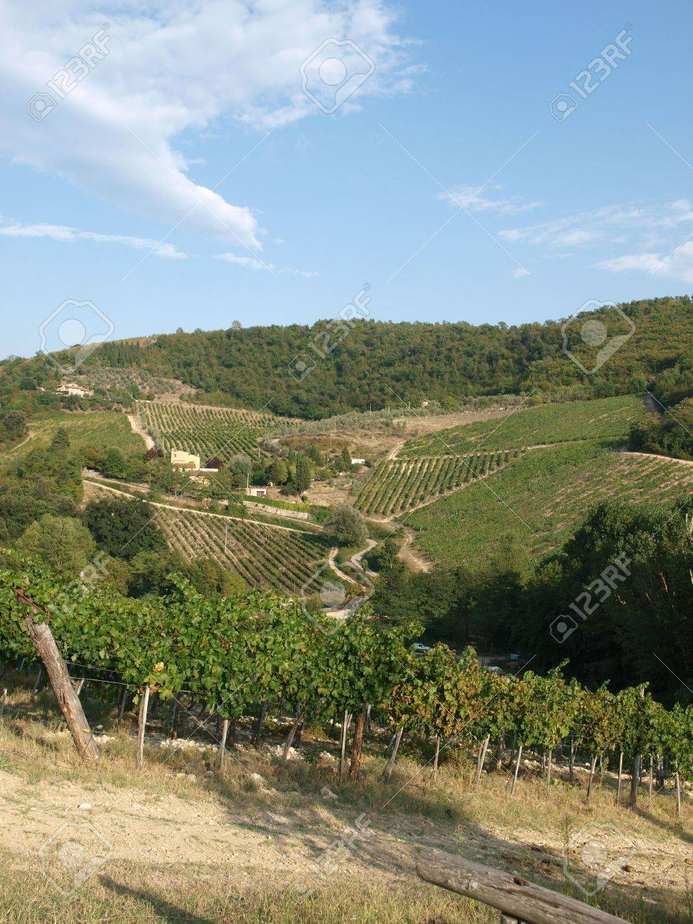 Vineyards and olive fields in Chianti, Tuscany Stock Photo - 6837865