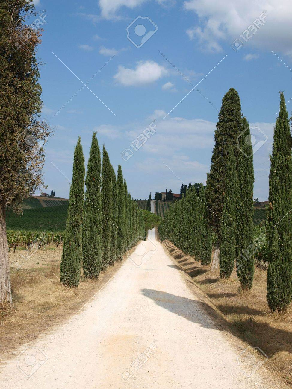 Tuscan landscape in the best edition Stock Photo - 6924765