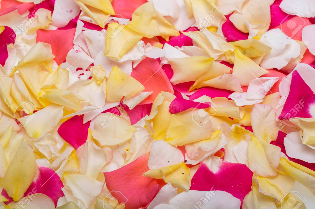 Petals Of Pink And Yellow Roses Flowers Background Stock Photo