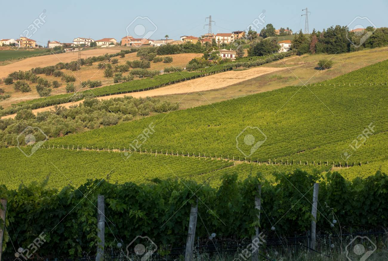 Panoramic view of olive groves, vineyards and farms on rolling