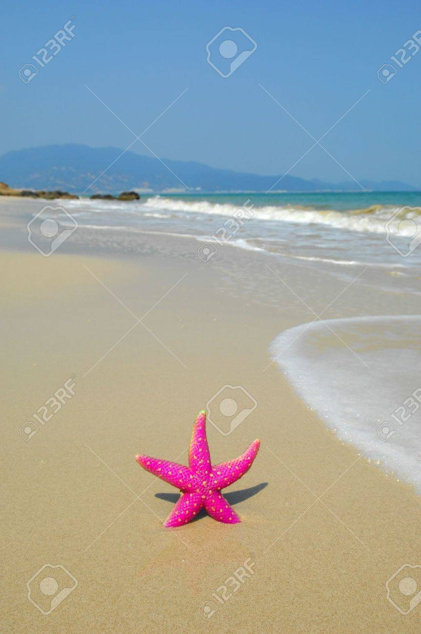 starfish on reef seacoast Stock Photo - 11519371