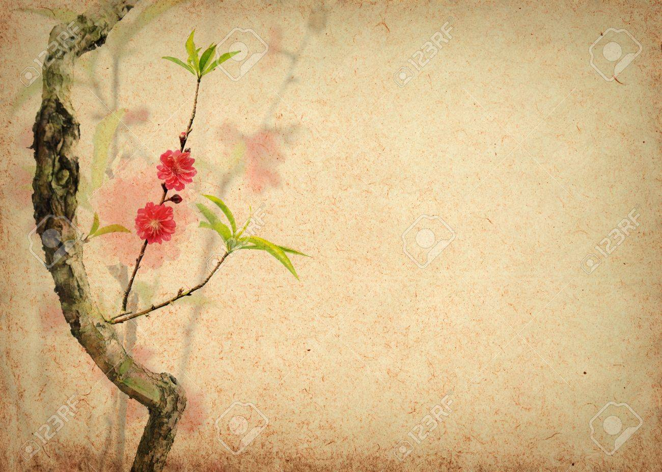 Cherry Blossoms Stock Photo, Picture And Royalty Free Image. Image ...