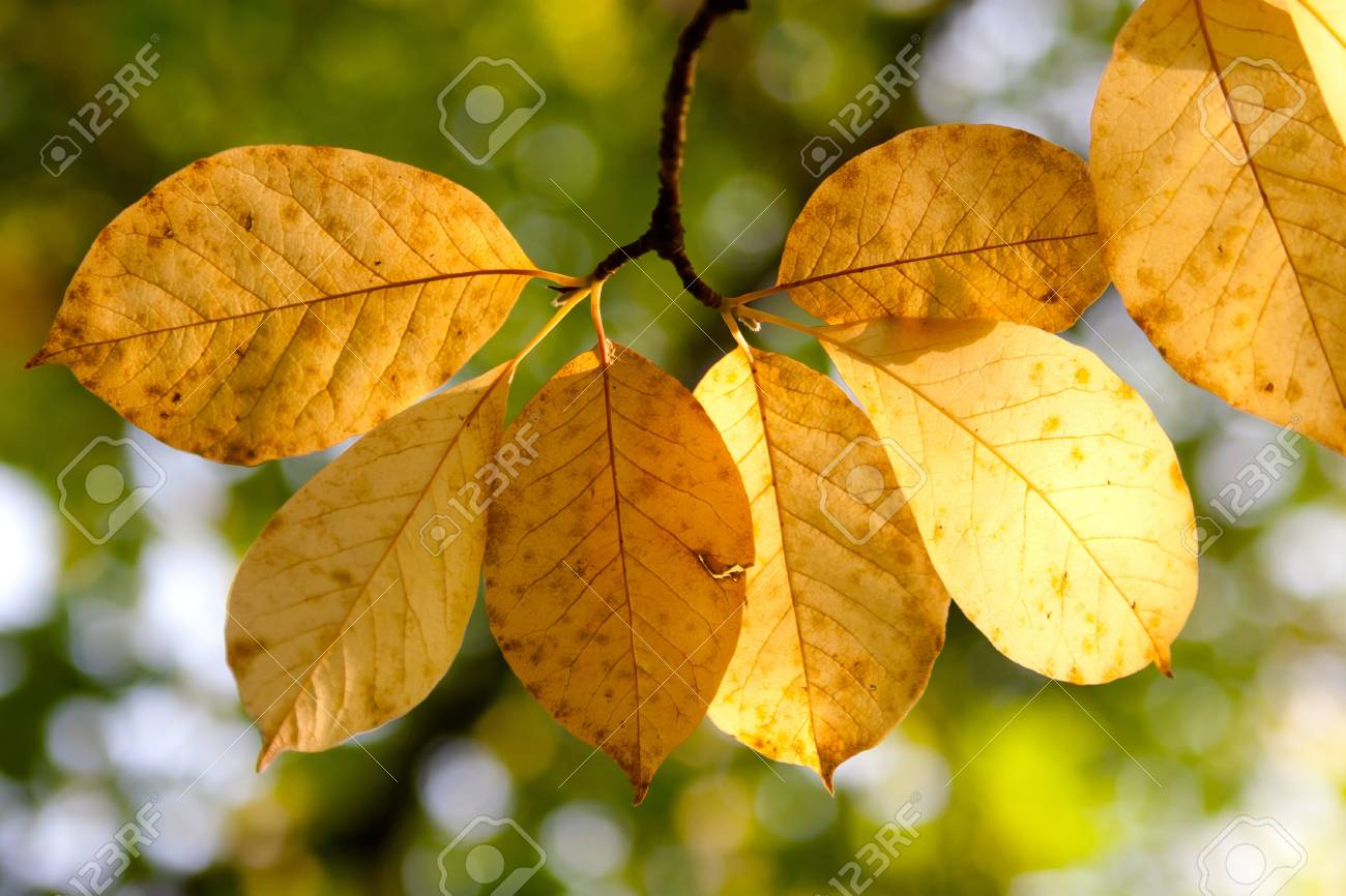 Autumn  wilted leaves in a forest Stock Photo - 21223093