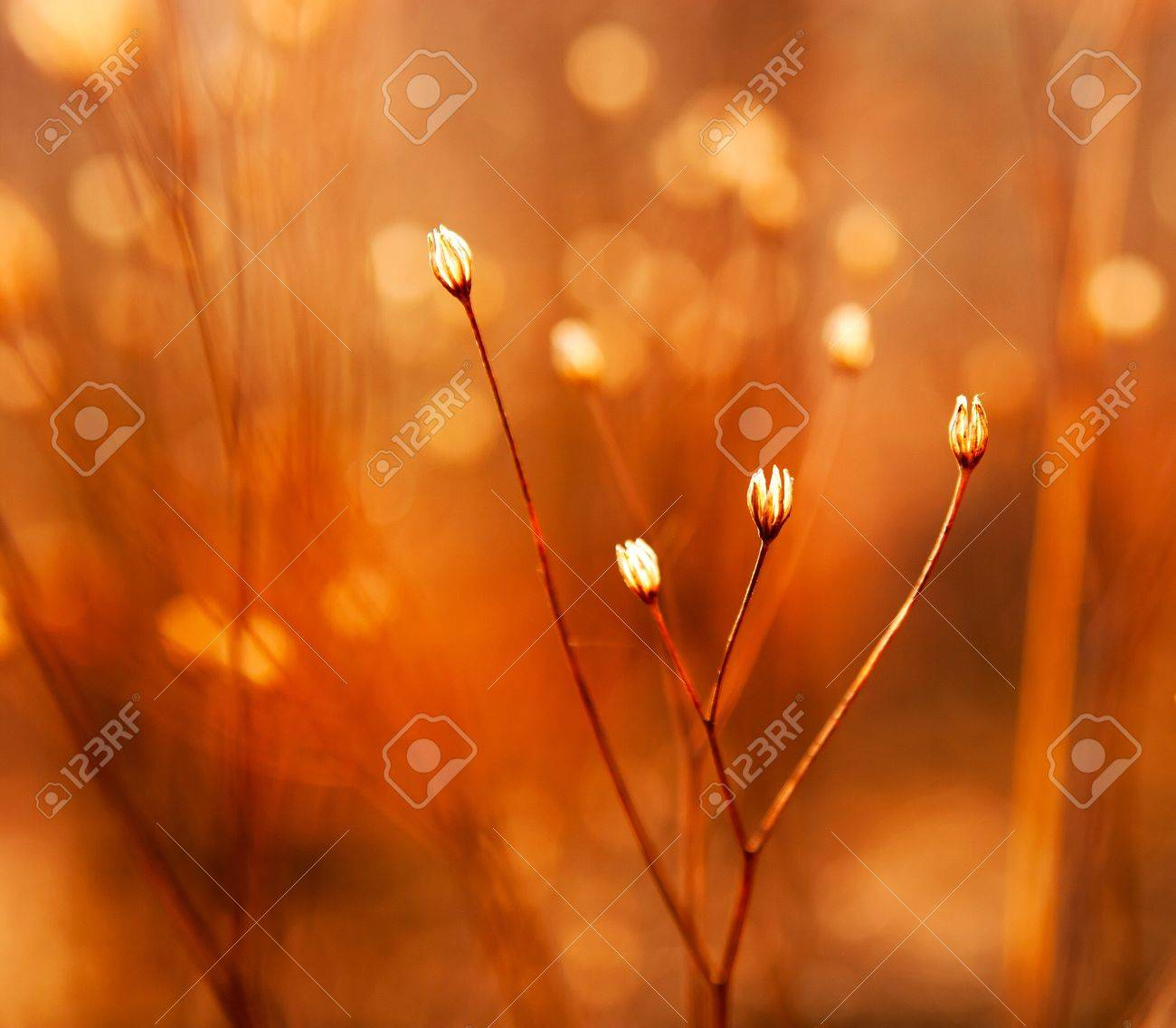 The buds of weed in sunshine - 21223176