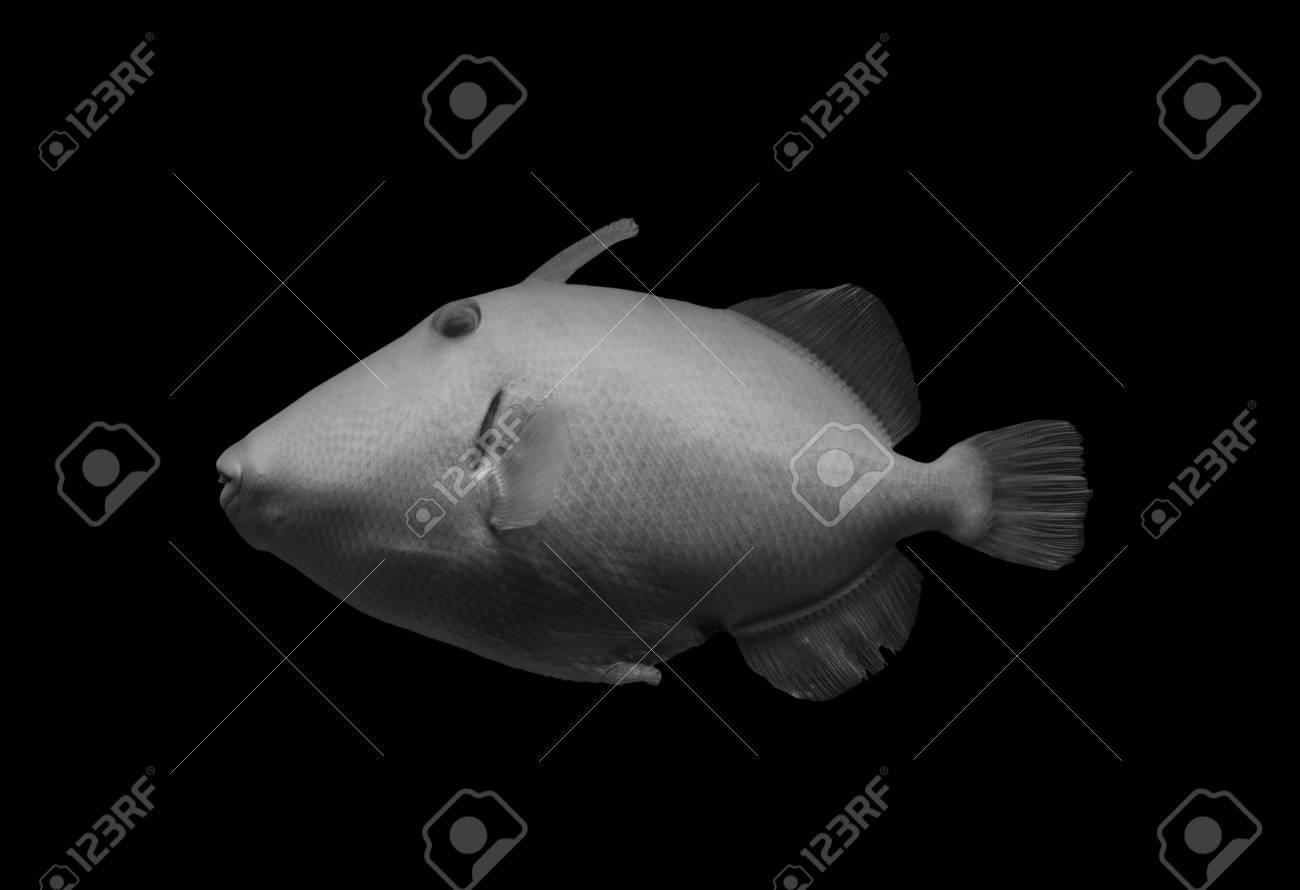 fish on black background, isolated . - 117911253