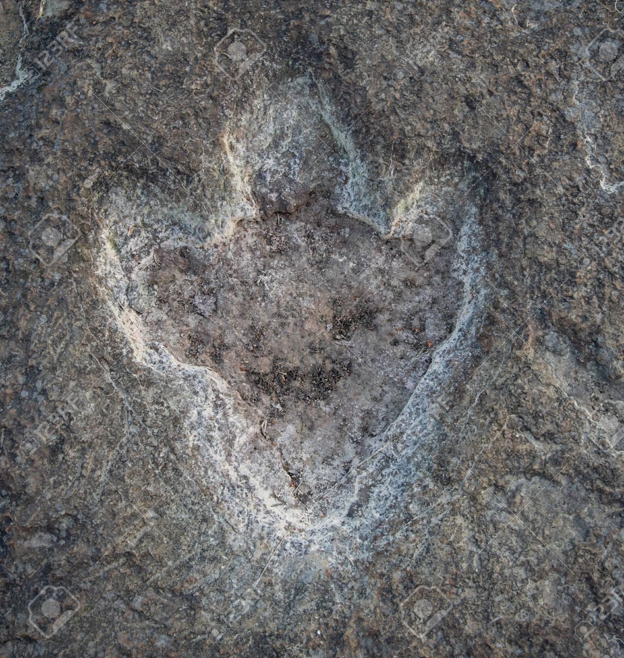 The footprints of dinosaur on a stone . - 117911270