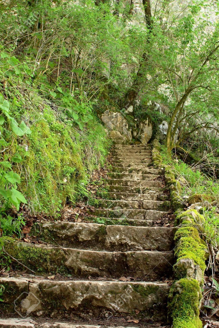 antiguas escaleras de piedra en el bosque del parque nacional croata foto de archivo