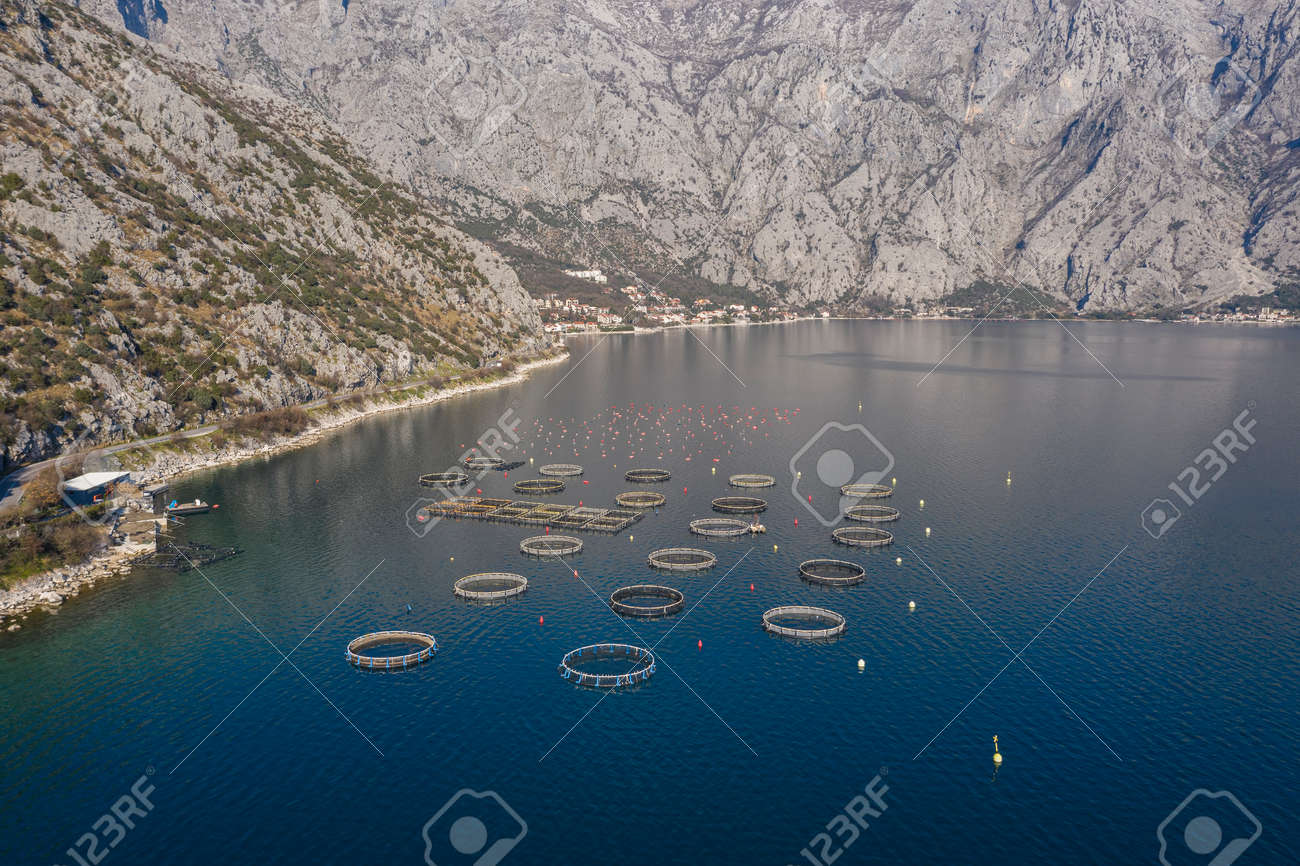 Aerial shoot of oysters, mussels and fish farming with traps and buoys in Boka-Kotor bay, Montenegro, the Adriatic coast in the springtime. Mountains in the background - 165654998