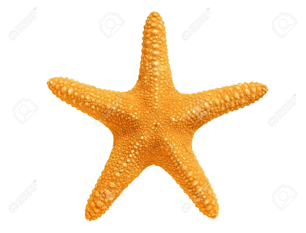 big yellow sea star isolated on white background stock photo
