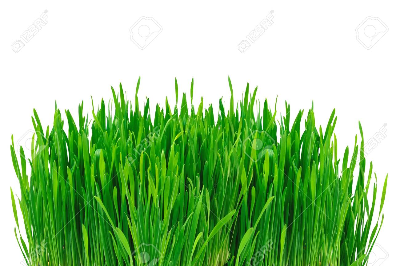 Green grass isolated on white background Stock Photo - 11286529