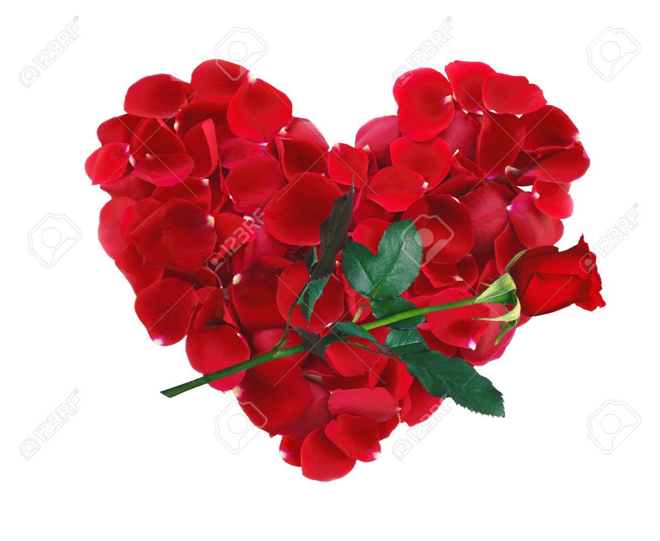 Mooie Hart Van Rode Rozenblaadjes En Rose Bloem Geisoleerd Op Wit