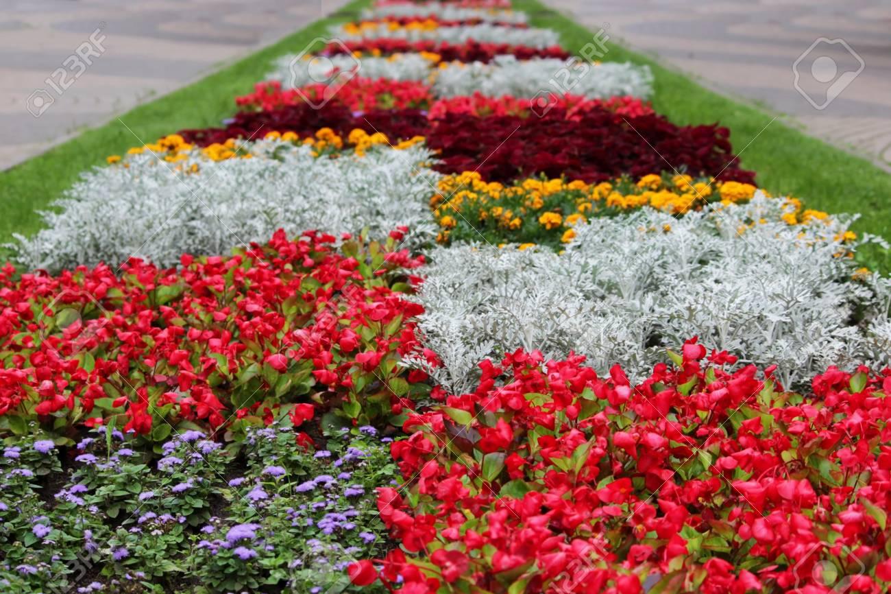 Une variété de motifs et des dessins de fleurs de différentes couleurs sur  le jardin dans le parc de la ville