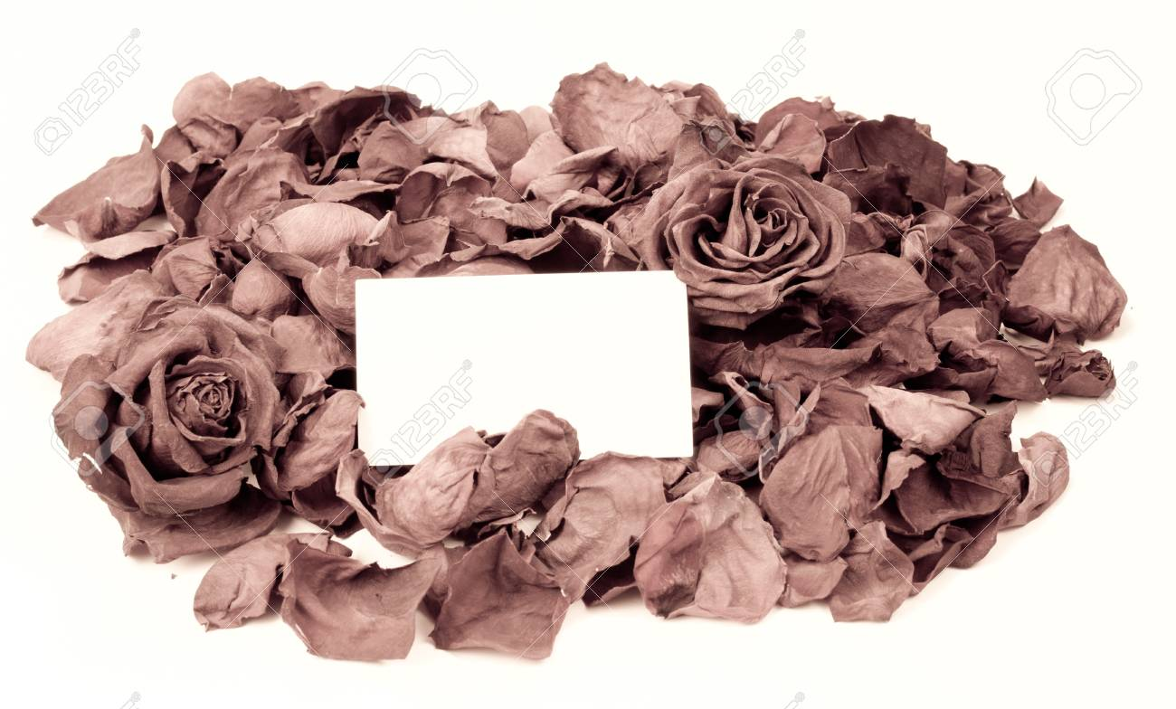 dried roses as a background with card for text in the middle Stock Photo - 12228423