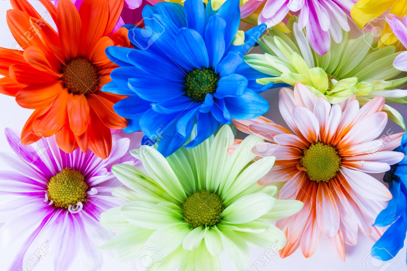 Close Up Of A Group Of Colorful Spring Flowers In Pastel Colors