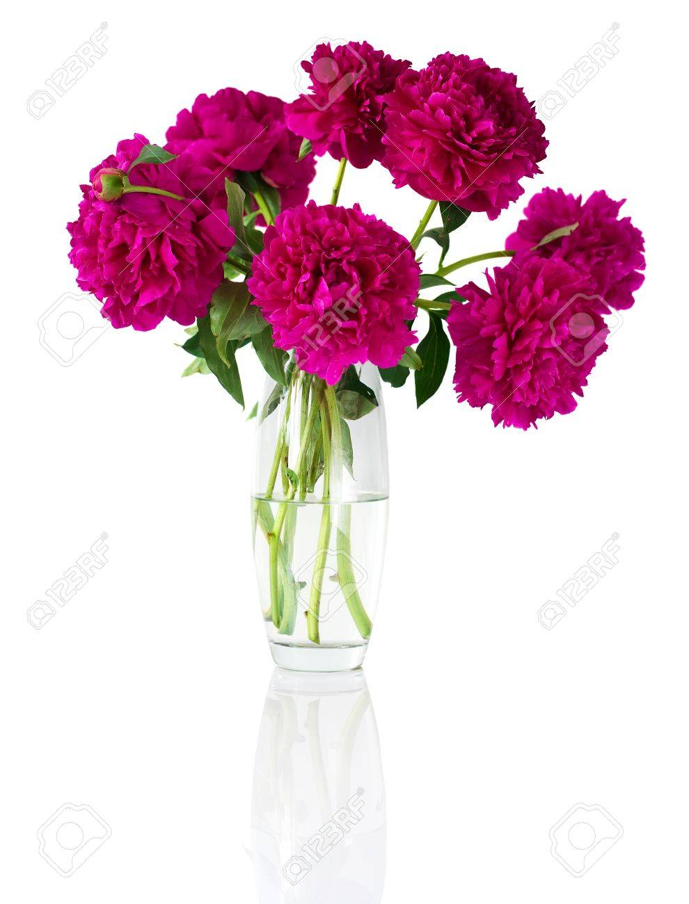 Bouquet of peonies in vase, isolated on white Stock Photo - 11385917