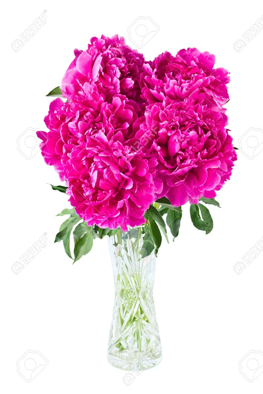 Bouquet of peonies in vase, isolated on white Stock Photo - 11796115