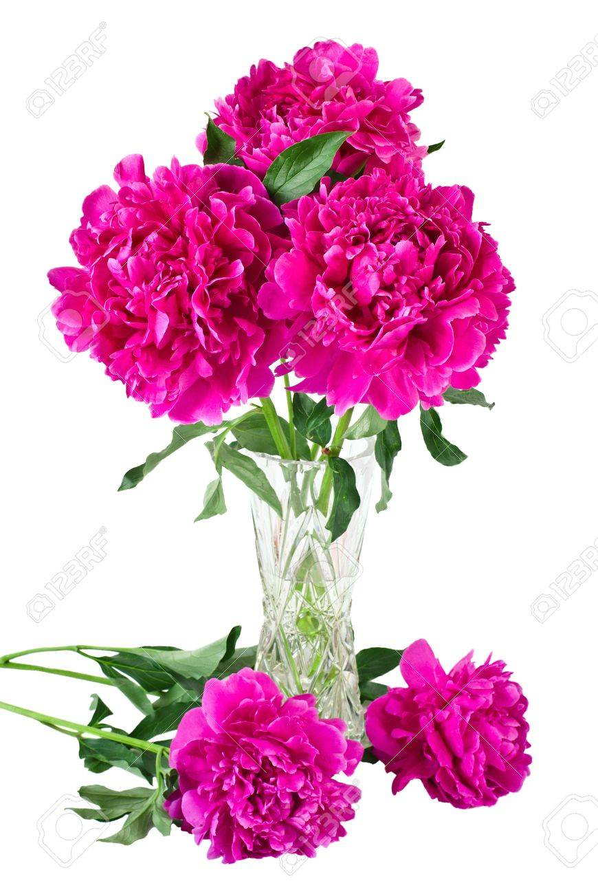 Bouquet of peonies in vase, isolated on white Stock Photo - 11850996