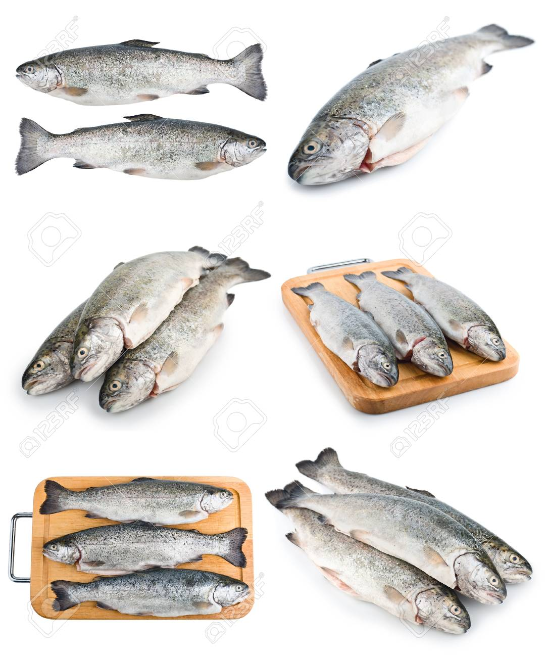 Fresh raw trout fish isolated on white background Stock Photo - 15581017