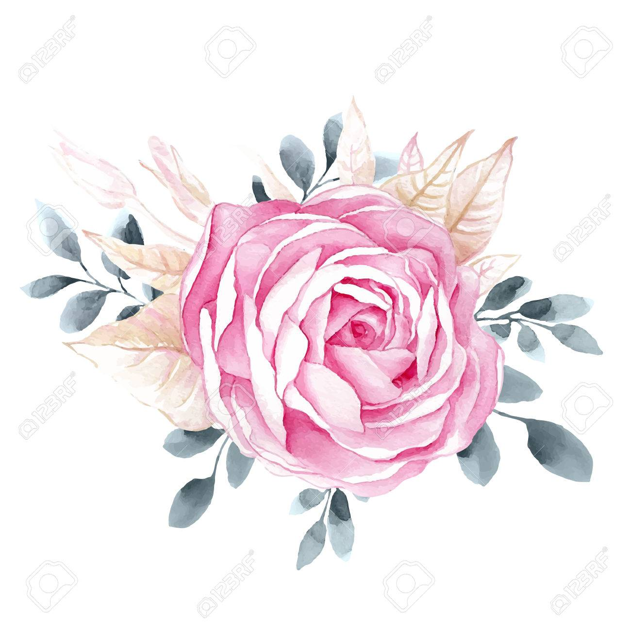 Watercolor illustrations of rose flower isolated on white background. Background for your design and decor. - 51894826