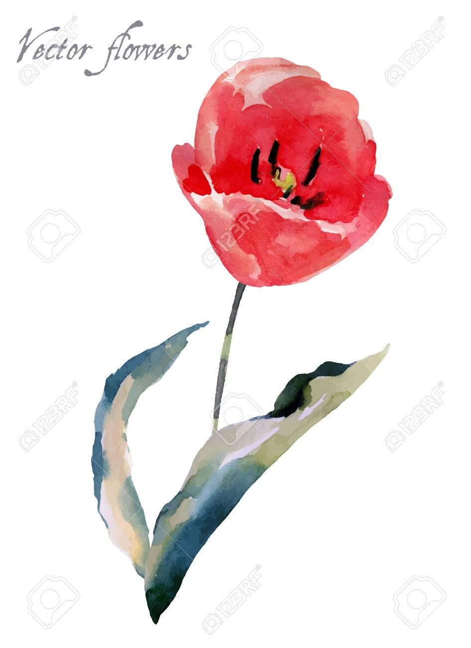 tulipe aquarelle