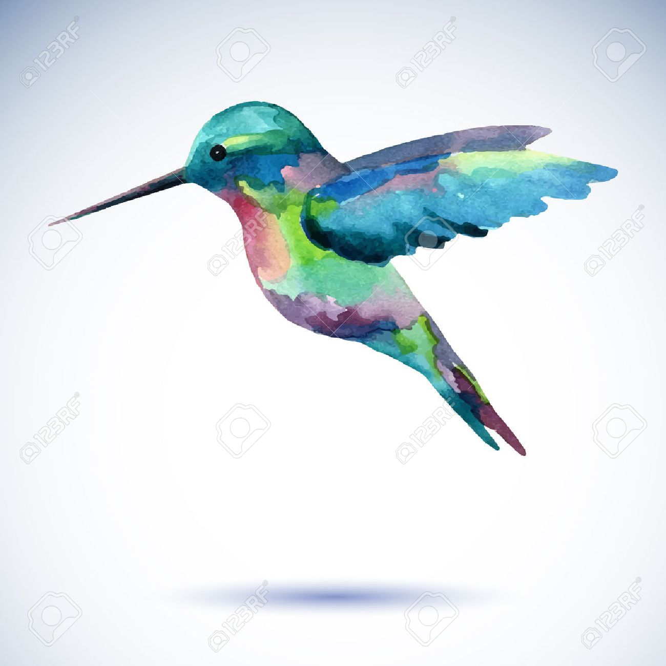 Hummingbird watercolor painting bird on the white background. Watercolor illustration. - 58409658