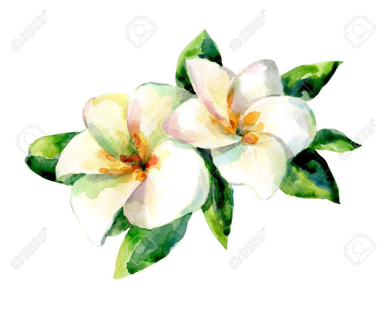 Watercolor illustration of exotic flower on a white background. Background for your design and decor. - 63721260