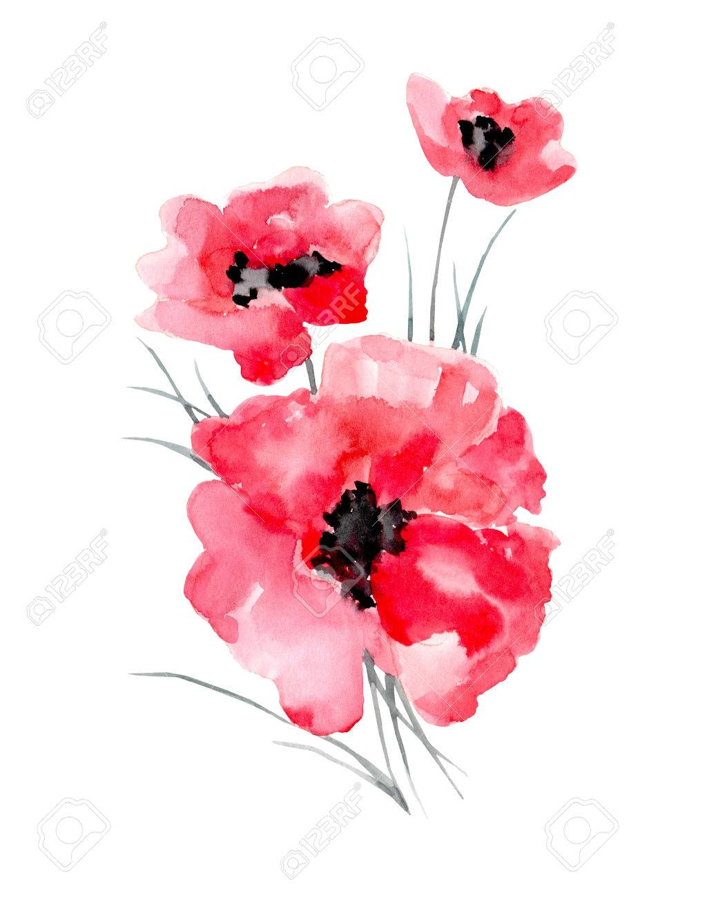 Watercolor illustration of a poppy on a white background. Background for your design and decor. - 63721262
