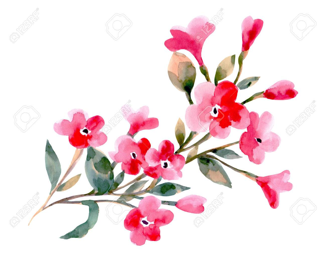 Watercolor illustration of a cherry flowers on a white background. Background for your design and decor. - 63721266