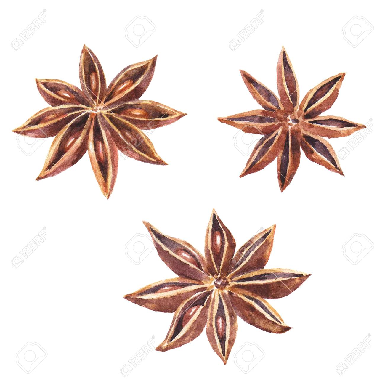 Watercolor set of christmas spice. Anise hand painted illustration on white background - 67669965