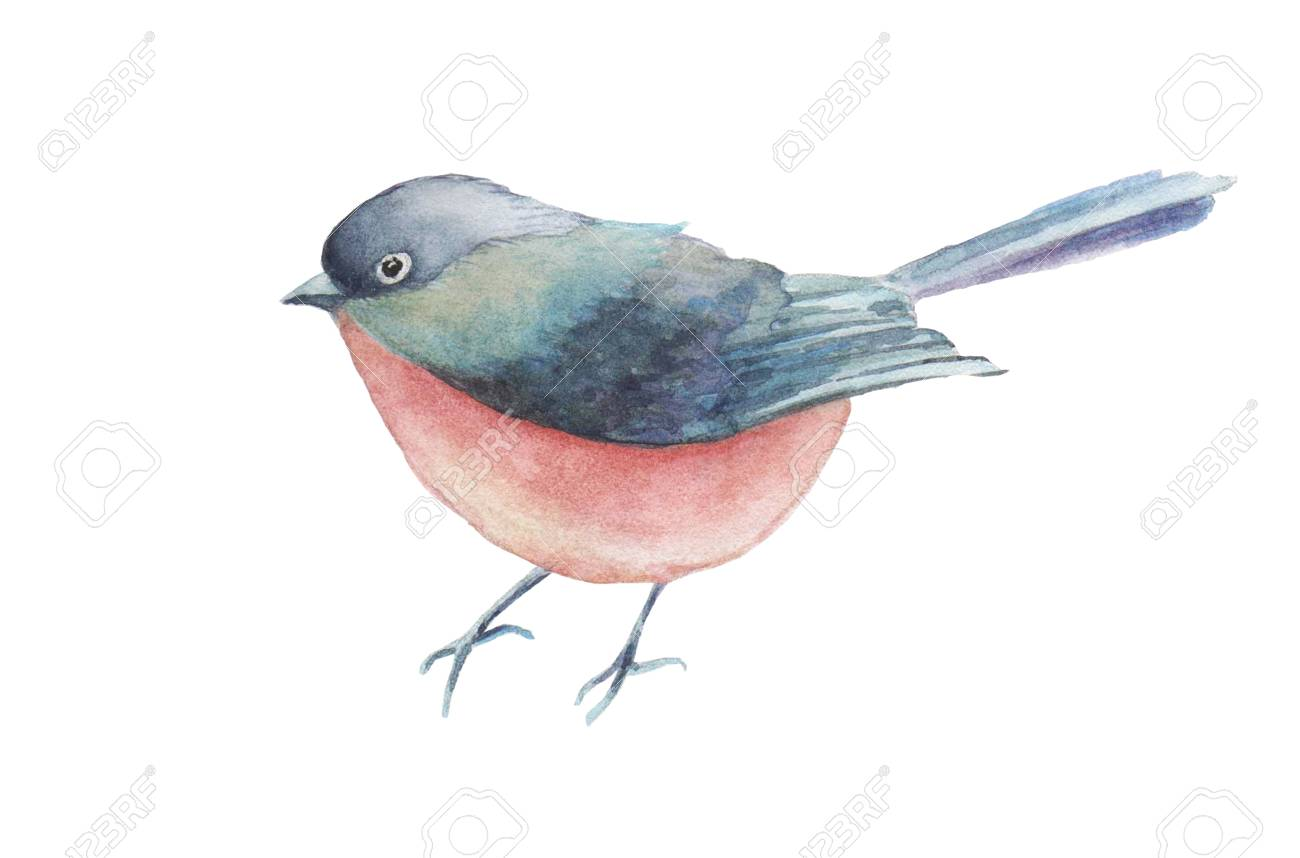 Watercolor bird hand drawn illustration isolated on white background. - 67674008
