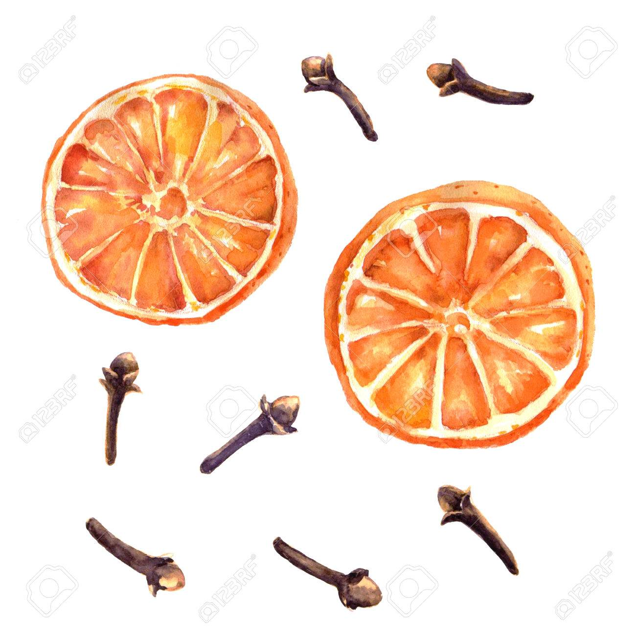 Watercolor set of christmas spice. Orange and cloves hand painted illustration on white background - 67674007