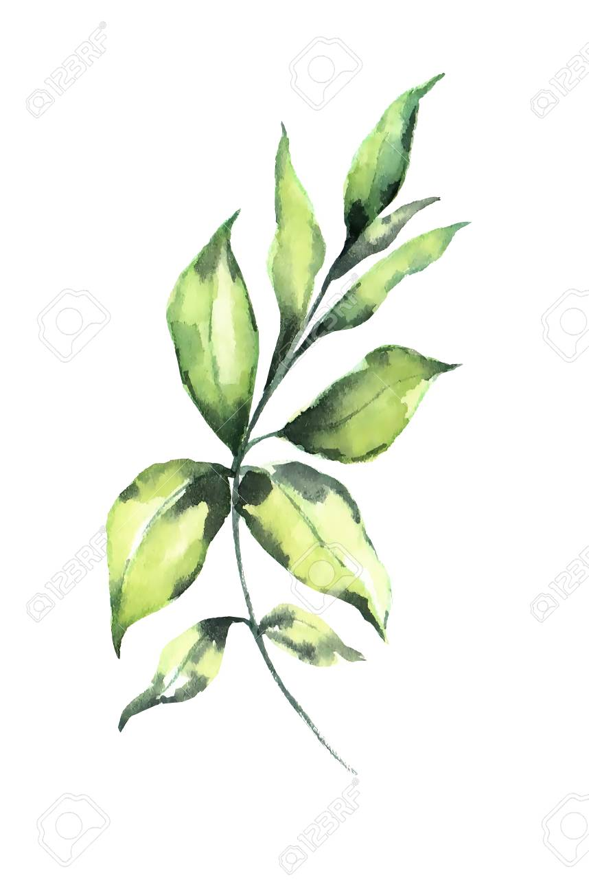 Watercolor leaf on white background design element. It can be used for card, postcard, cover, invitation, birthday card. - 67676317