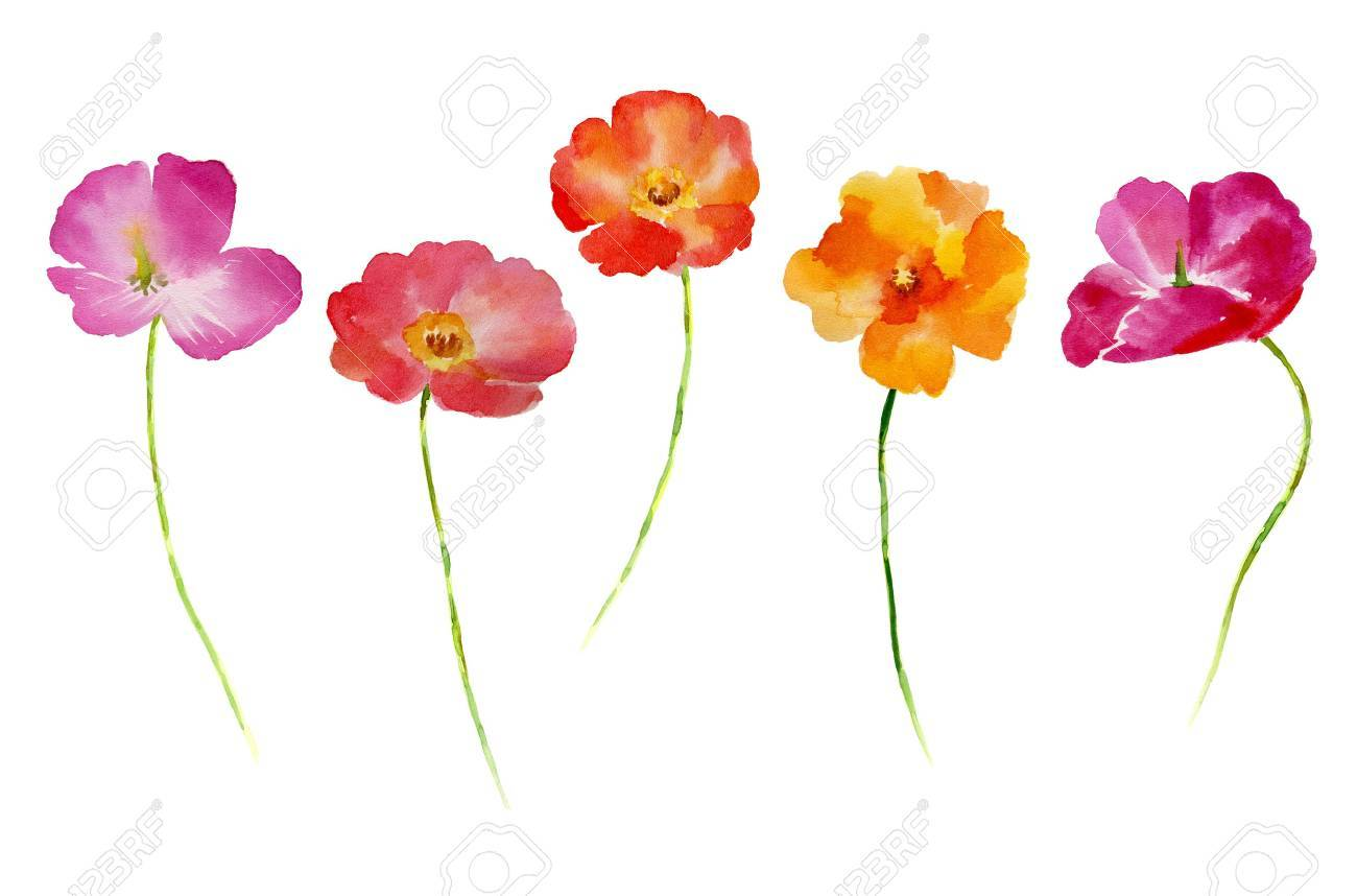 Watercolor flower set for your design. Flower set in isolated on white background. Flower Hand-drawn illustration. - 67676584