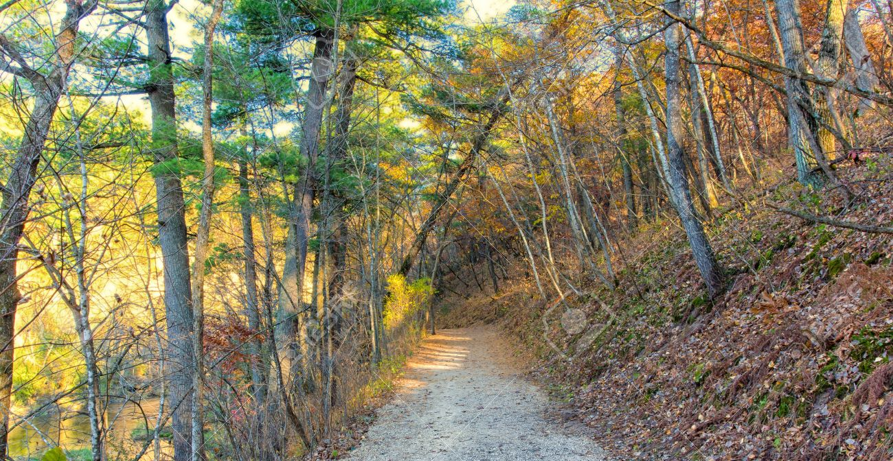 Beautiful Autumn Path in Late Afternoon Stock Photo - 15793941