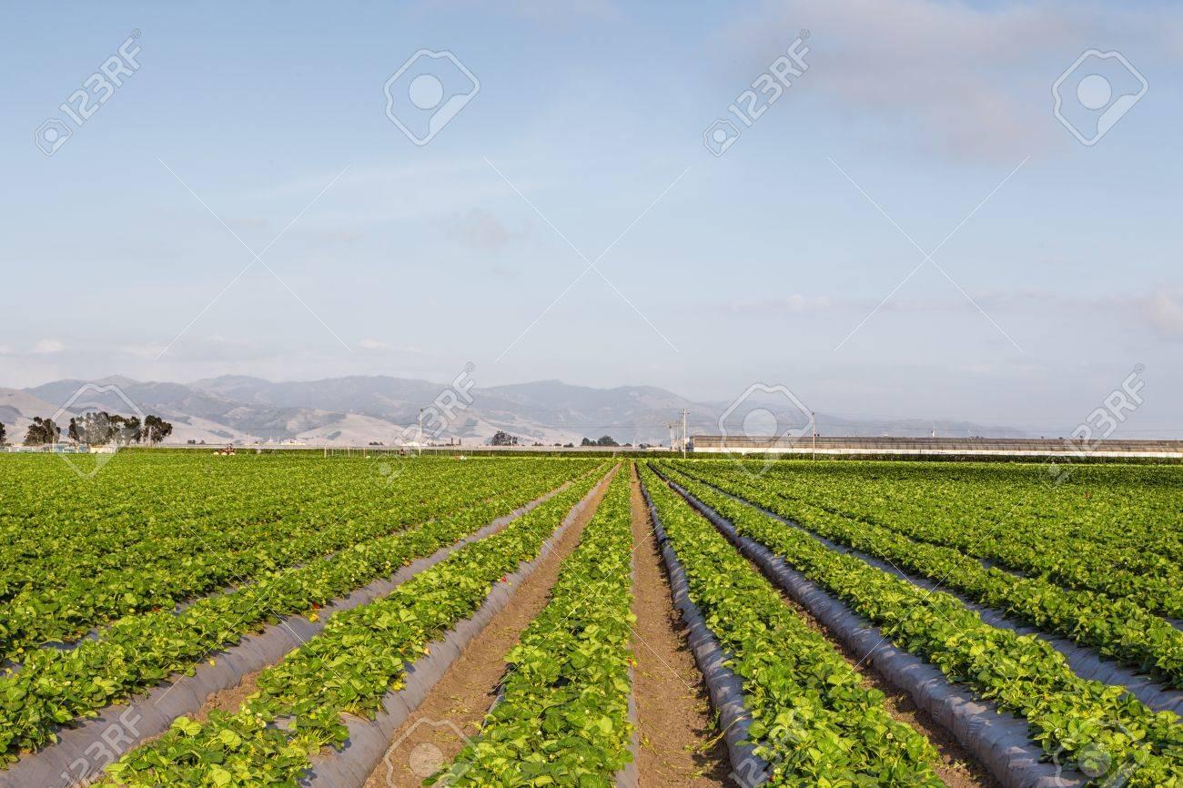 an analysis of salinas valley