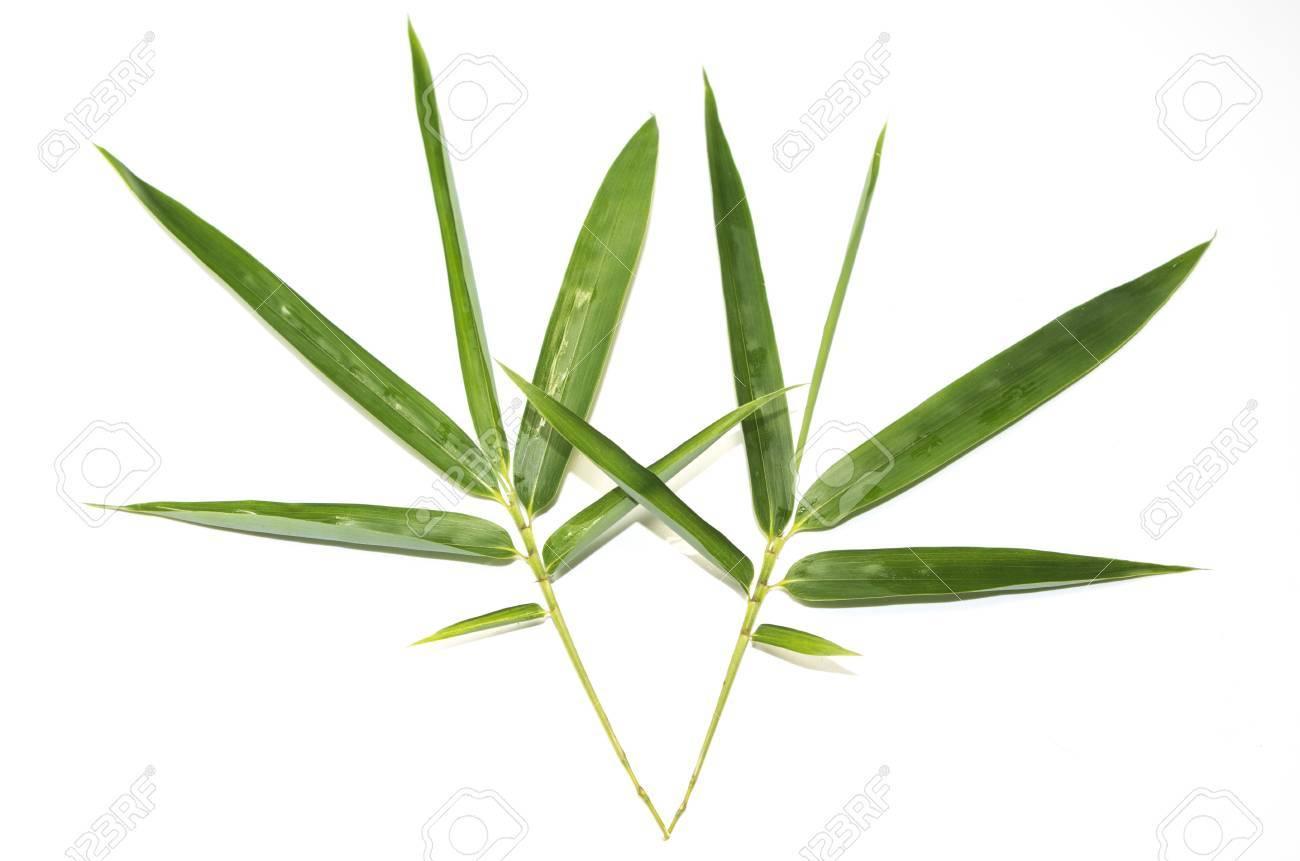 Foglia Di Bamb.Foglie Di Bambu Verdi Taglienti