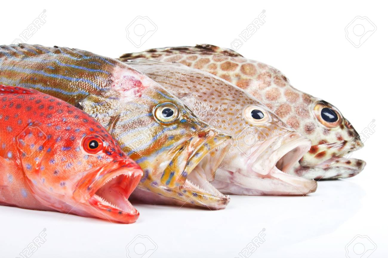 Grouper Stock Photo - 16941727
