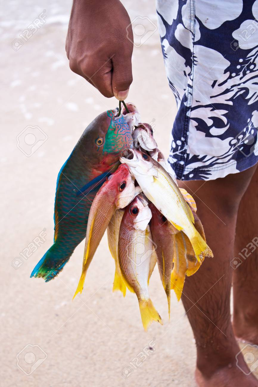 andaman fishes Stock Photo - 17131295
