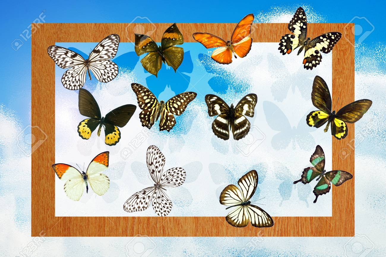 A butterfly is a mainly day-flying insect of the order Lepidoptera Stock Photo - 19917327