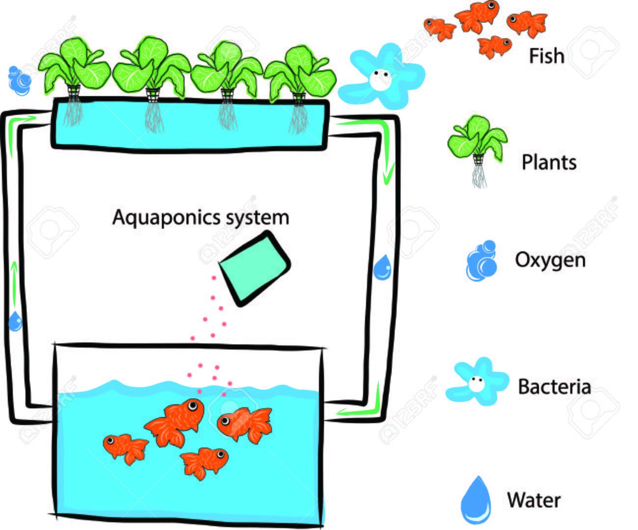 Système aquaponique Banque d'images - 34998068