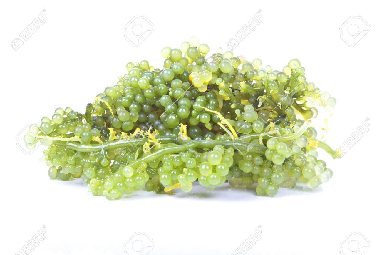 Raisins de mer ovale algues Banque d'images - 23078090