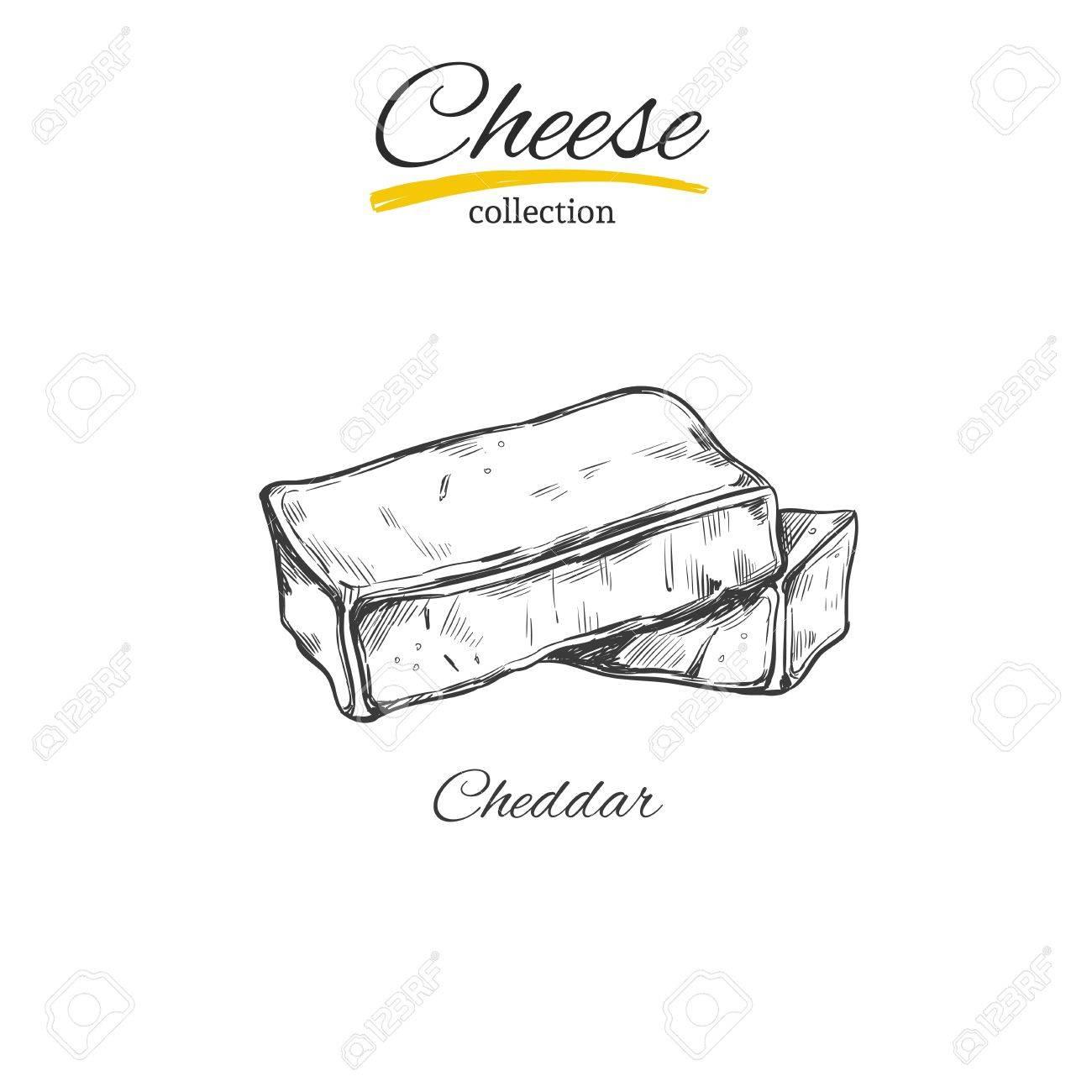 Cheese vector sketch stock vector 84807967