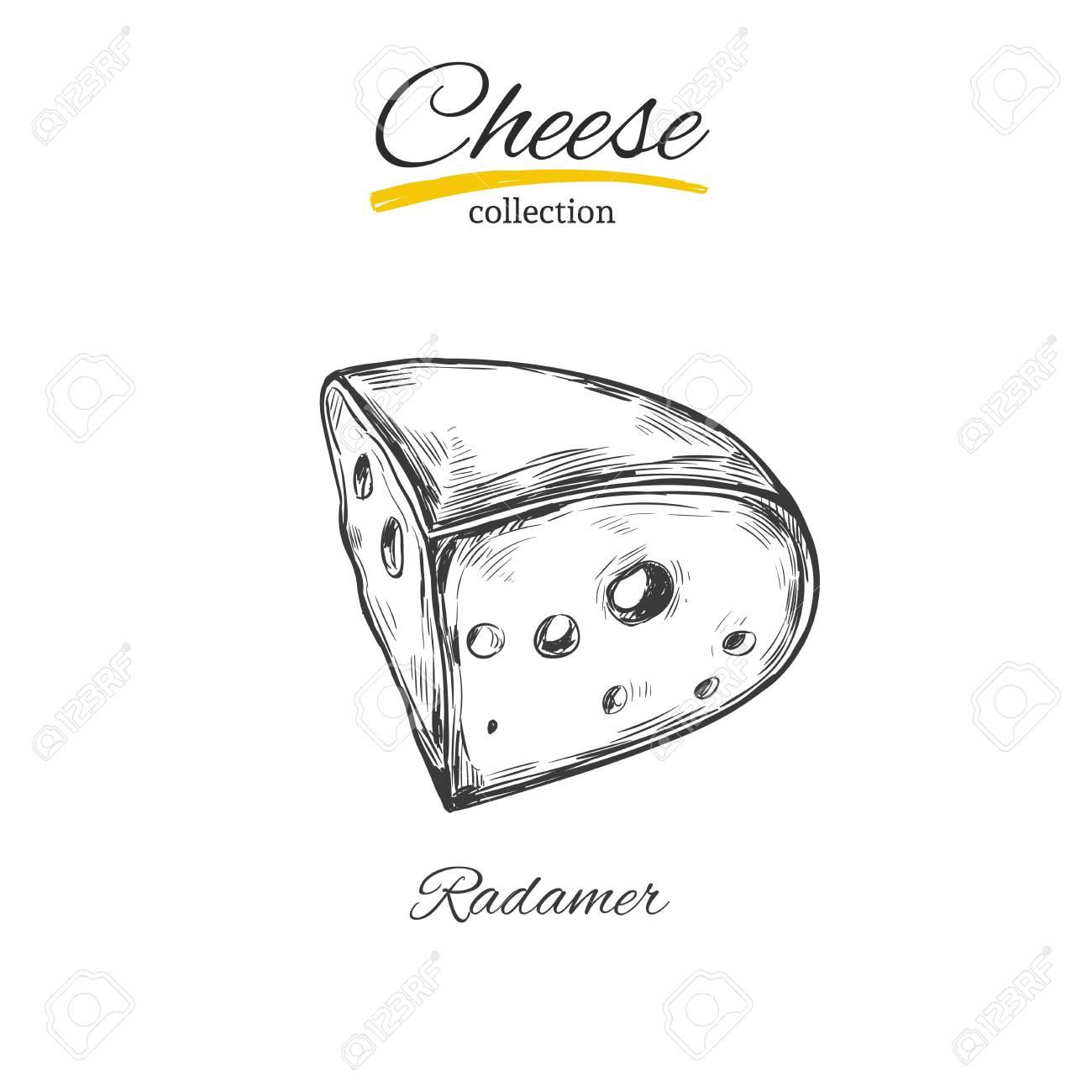 Cheese vector sketch stock vector 84807971