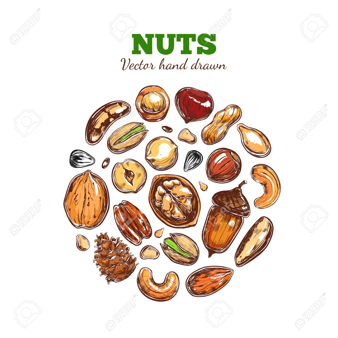 Nuts and seeds collection. Archivio Fotografico - 91055826