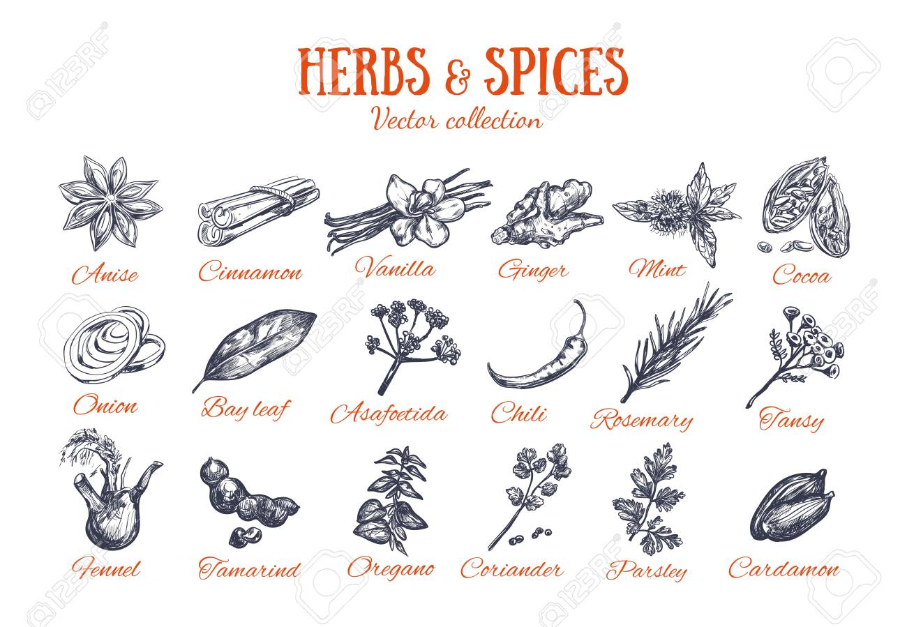Herbs and Spices condiments 4 - 101211148