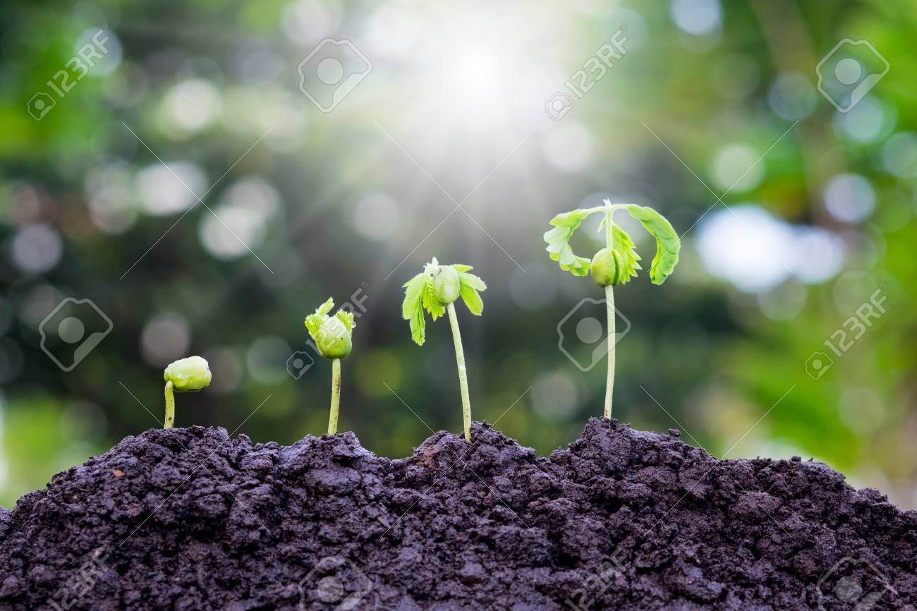 Plant Growing On Soil With Sunlight And Green Bokeh BackgroundAgricultureGrowing Plants