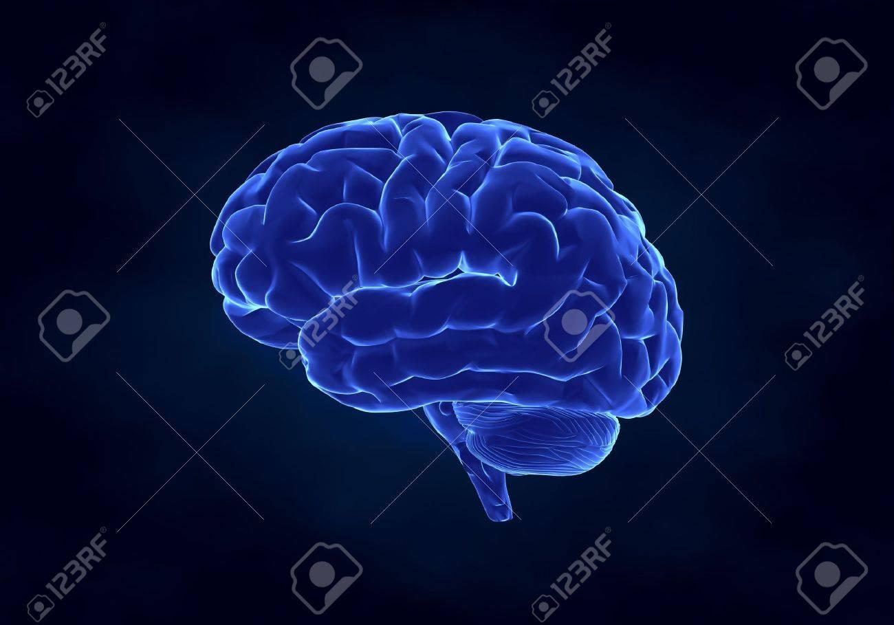 X- ray human brain Stock Photo - 6150571