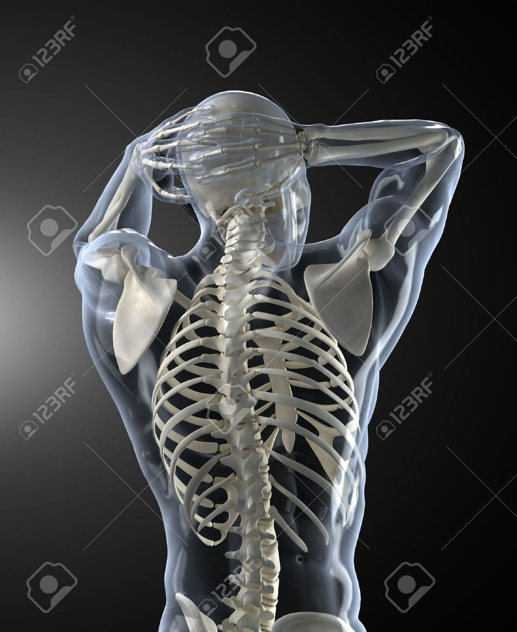 Human Body Medical Scan back view Stock Photo - 9090689