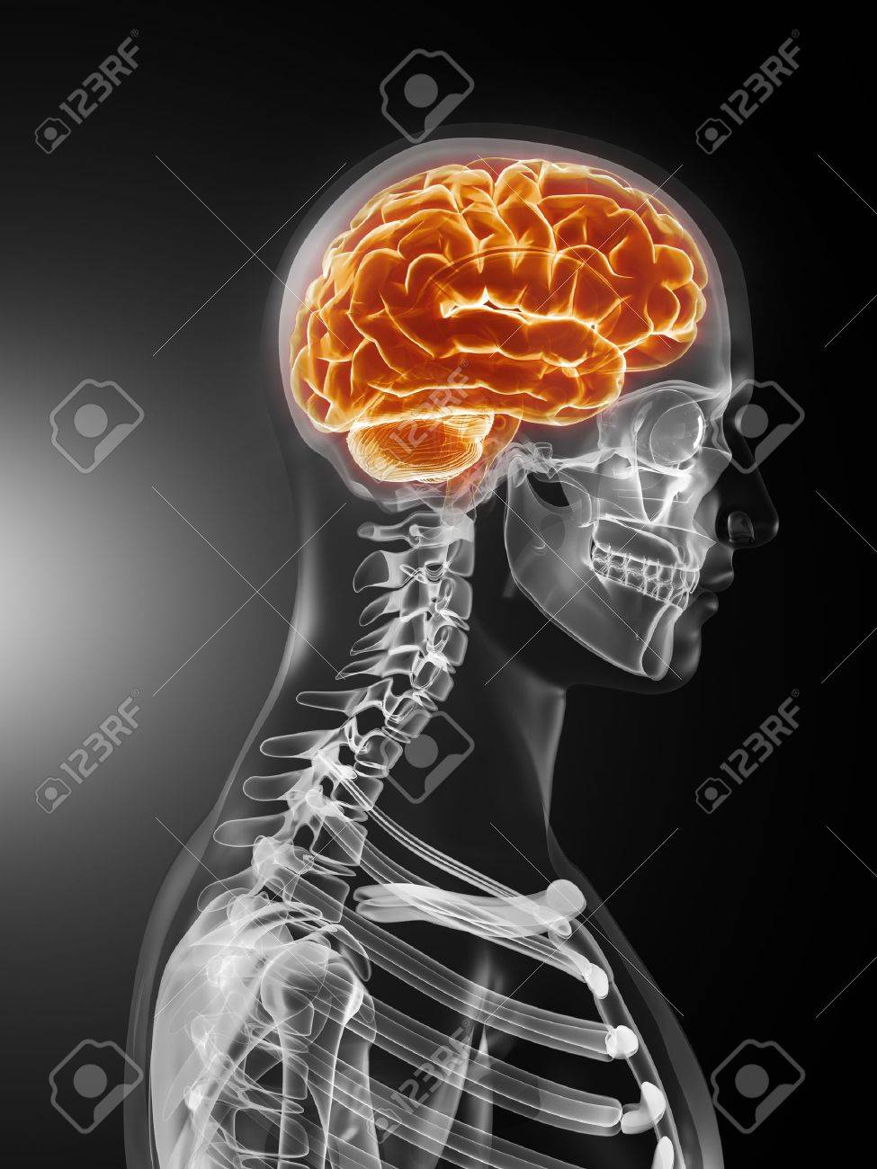 Human Brain Medical Scan Stock Photo - 9162870
